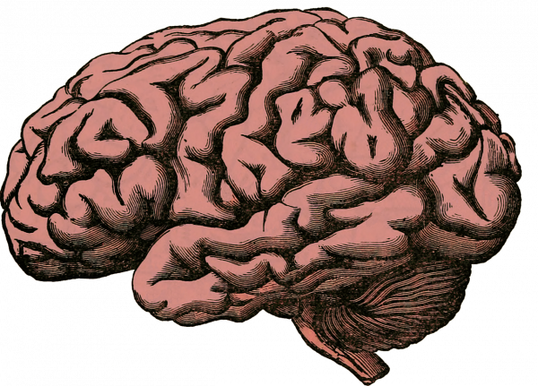 Pain Neuroscience All in Your Head